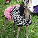 Because if you can't glam your dog, whom can you glam?